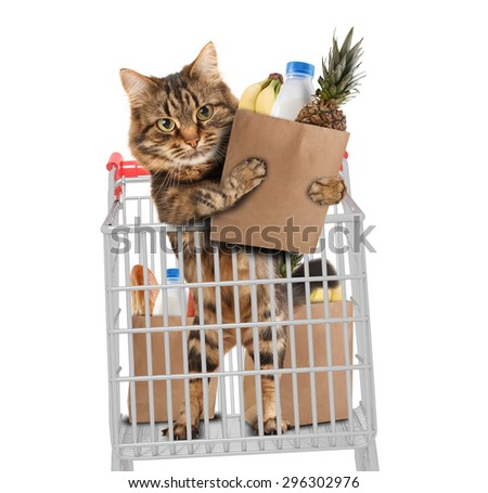 Funny cat in the store, on white background - stock photo