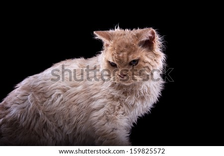 Funny cat is isolated on a black background.