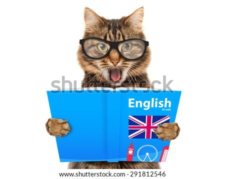 Funny cat is learning English. Cat reading a book. - stock photo