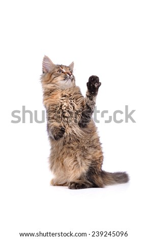 Funny cat isolated on white