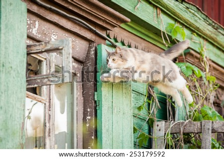 Funny cat jumping into the open window - stock photo