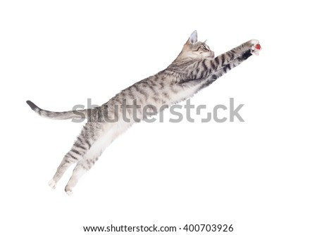 Funny cat jumping to catch a toy isolated on white - stock photo