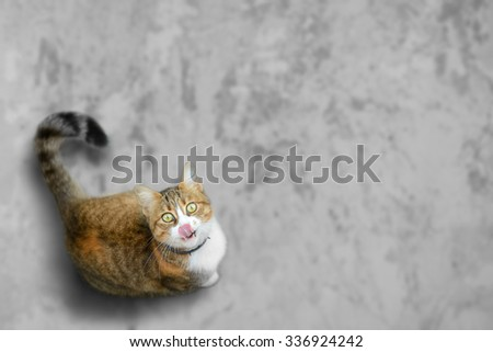 Funny cat licks itself looking for some yummy - stock photo