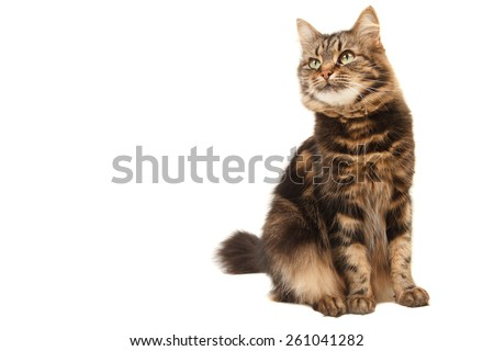 Funny cat on white background - stock photo
