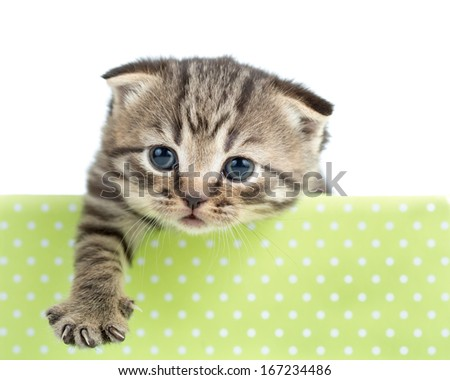funny cat or kitten in cardboard box isolated - stock photo