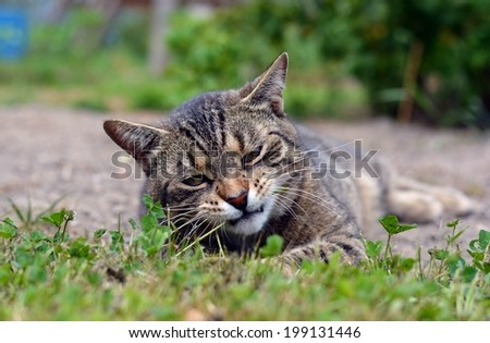 Funny cat playing game in the garden
