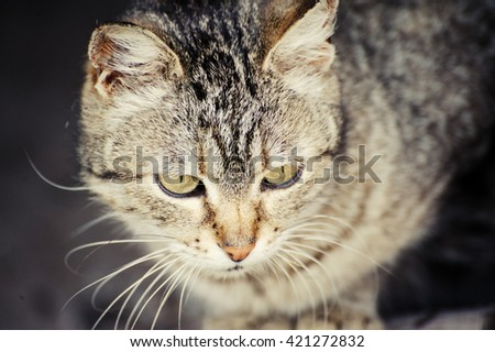 funny cat with blurred background - stock photo