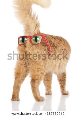 Funny cat with glasses on the back