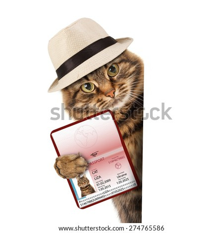 funny cat with passport  - stock photo