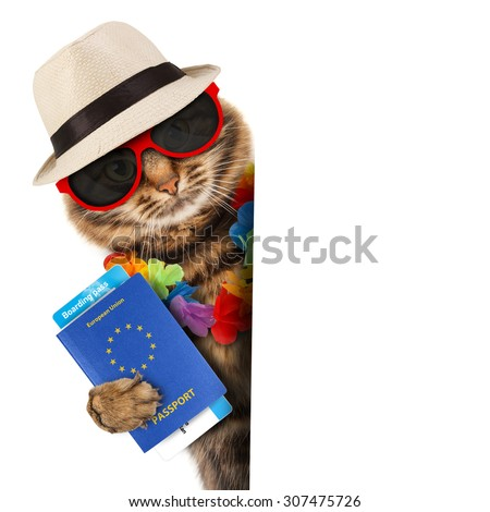 Funny cat with passport and airline ticket. - stock photo