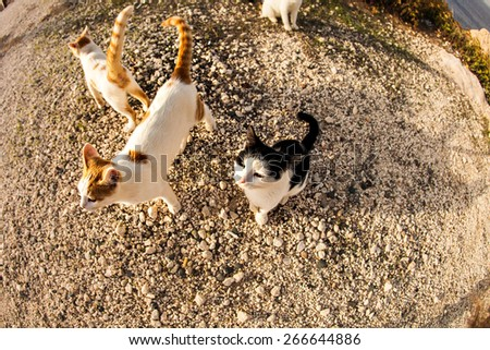 funny cats  - stock photo