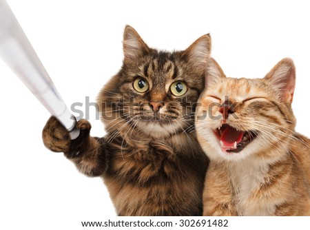 Funny cats - Self picture. Selfie stick in his hand. Couple of cat taking a selfie together with smartphone camera - stock photo