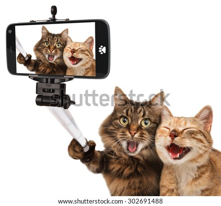 funny cats self picture selfie stick stock photo 302691488 shutterstock. Black Bedroom Furniture Sets. Home Design Ideas
