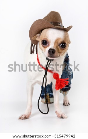 Funny chihuahua puppy with hat (isolated on white)