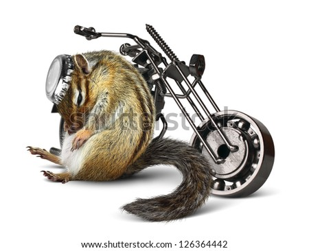 Funny chipmunk biker with motorcycle on white - stock photo
