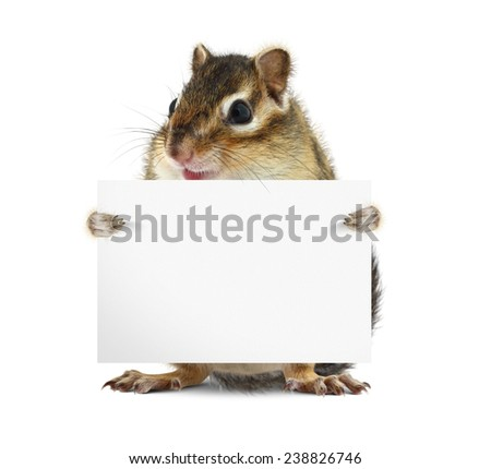 Funny chipmunk hold banner on white background - stock photo