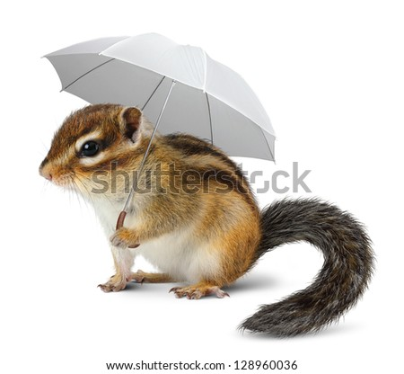 Funny chipmunk with umbrella on white, weather concept - stock photo