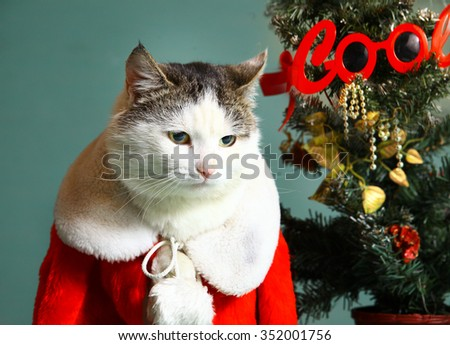 funny Christmas photo of cool cat in santa claus gown and chrismas tree with decorations close up expression portrait on blue wall background