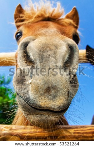 Funny closeup of a pony looking at the camera (shallow dof, focus on the muzzle) - stock photo