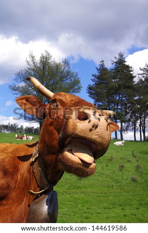Funny cow sticking out tongue with pasture in background - stock photo