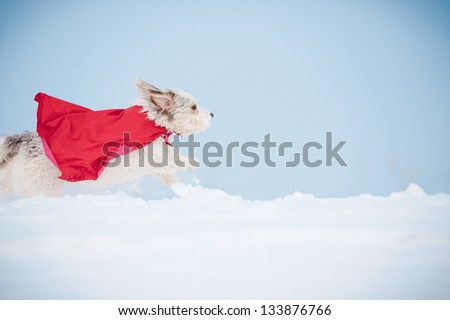 funny curly super hero dog wearing the red cloak running fast on blue sky background