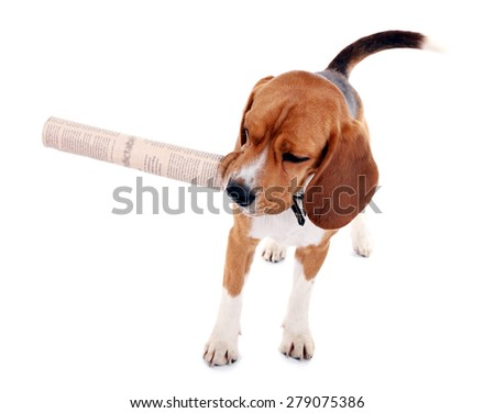 Funny cute dog isolated on white - stock photo