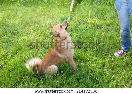 Funny cute dog playing with wooden stick, outdoors - stock photo