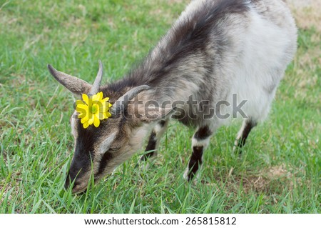 Funny Cute goat with flower
