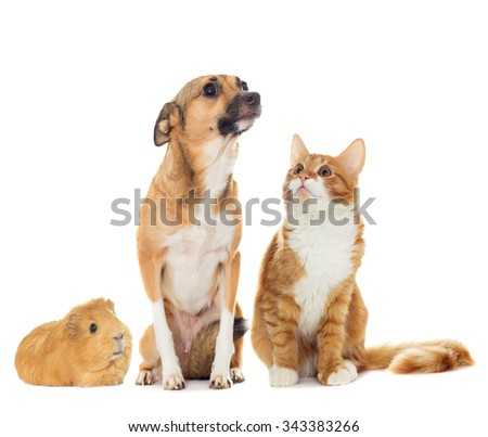 funny dog and kitten isolated on white background