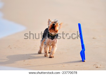 funny dog barking on the beach