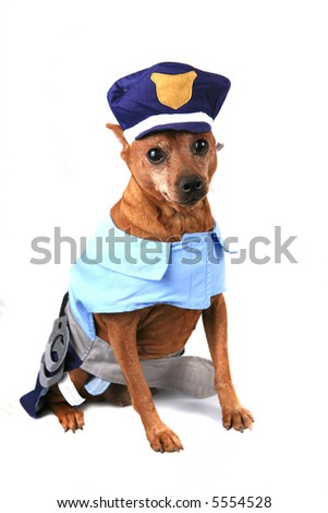 Funny Dog Dressed as a Police Officer - stock photo