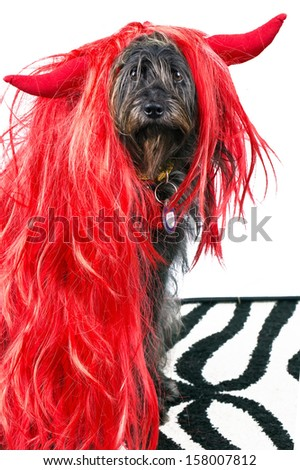 funny dog in red wig ans with evil horns - stock photo