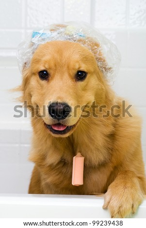 funny dog in the bath tub wearing a shower cap