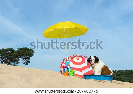 Funny dog is having a cooling down with water and parasol at the beach in the summer - stock photo