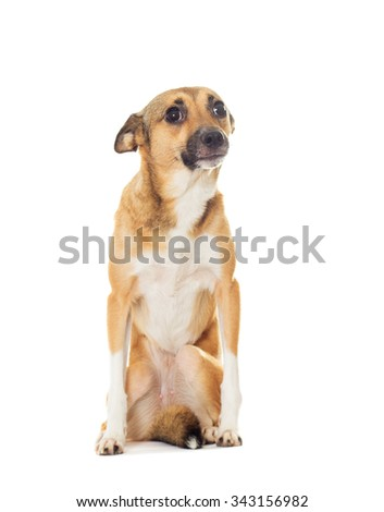 funny dog on a white background