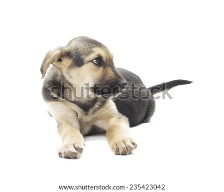 funny dog on a white background isolated