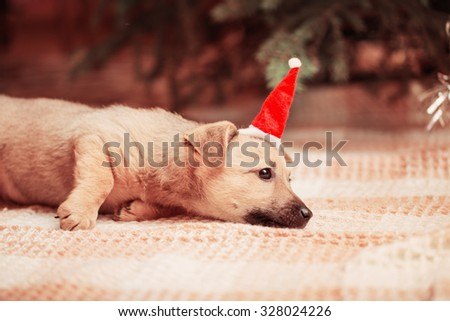 funny dog on background Christmas tree - stock photo