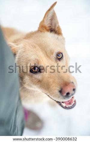 Funny dog smiling  - stock photo