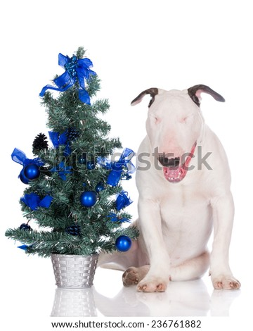 funny dog with a Christmas tree - stock photo