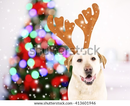 Funny dog with antlers near Christmas tree - stock photo