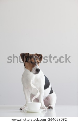 Funny dog with coffee - stock photo