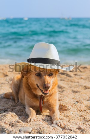 Funny dog with hat at the beach - stock photo