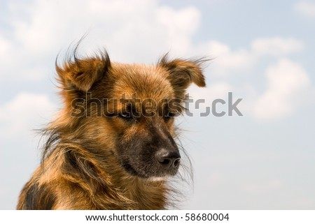 funny dog without name in sunny day