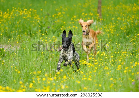 funny dogs playing on the green grass - stock photo