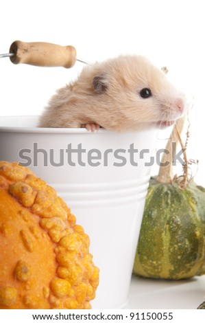 Funny domestic Syrian hamster siting in bucket  on white - stock photo