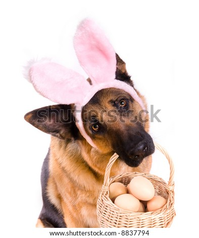Funny Easter dog or bunny rabbit holding basket full of eggs - stock photo