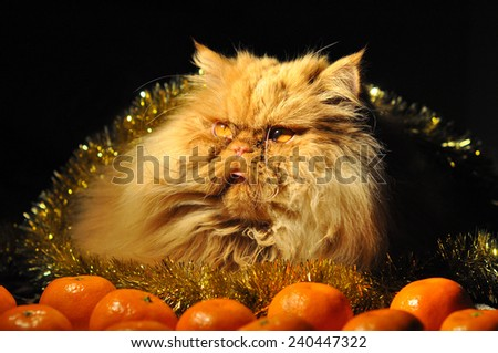 Funny fluffy cat on New Year's background - stock photo