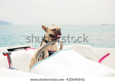 Funny French Bulldog dog is sitting behind the wheel of a speedboat, put his paws on the steering wheel against the sea, the carefree sunny summer day. lighting effects, speed boat - stock photo