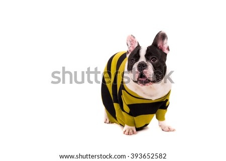 Funny French Bulldog puppy posing isolated over a white background - stock photo