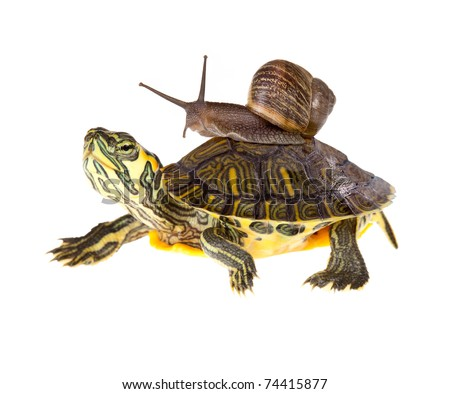 Funny garden snail taking a lift on a turtle's back - stock photo